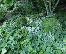 les plantes couvre sol avec images couvre sol
