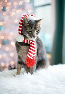 merry christmas pictures with cats merry christmas love the cats love and olive