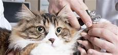 5 tips for grooming haired cats catster