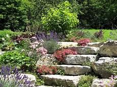 Kostenloses Foto Natur Steingarten Pflanzen