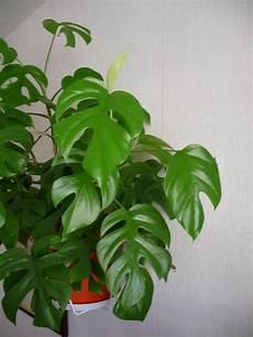 plante exotique d int 233 rieur l atelier des fleurs