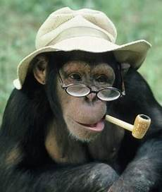 Kumpulan Gambar Lucu Monyet Yang Menggemaskan