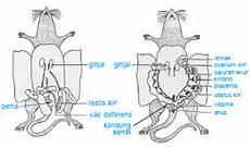 Semua Hal Sistem Reproduksi Pada Hewan