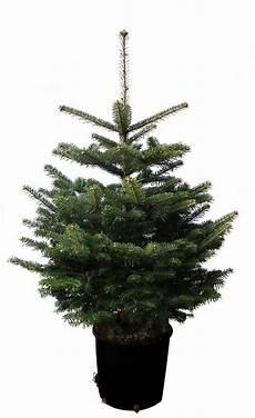 Weihnachtsbaumland Weihnachtsbaum 187 Echte Nordmanntanne Zum