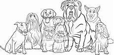 malvorlage malteser hund malbild