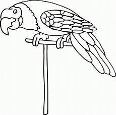 Mewarnai Quot Gambar Burung Beo Quot Contoh Anak Paud