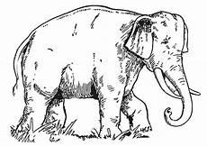 Malvorlagen Elefant Pdf Malvorlage Elefant Kostenlose Ausmalbilder Zum Ausdrucken