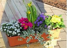 blumenkasten bepflanzen ideen bilder balkonkasten fr 252 hling garten blumen pflanzen ideen