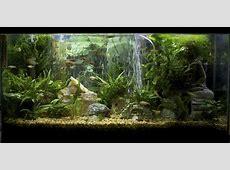 corner fish tanks aquariums