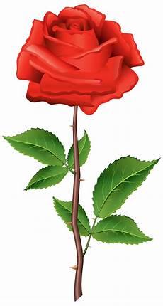 Gambar Bunga Format Png Gambar Bunga