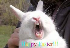 happy easter bunny 1funny
