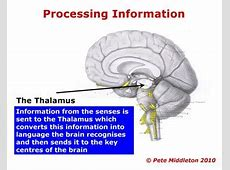 visual information processing research