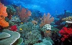 Surga Keindahan Alam Bawah Laut Indonesia Flora Dan Fauna
