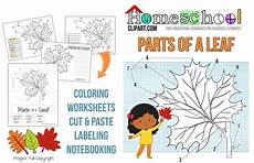science worksheets leaves 12281 free parts of a leaf unit study free homeschool deals