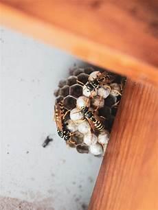 wespennest entfernen geht das einfach selber westwing