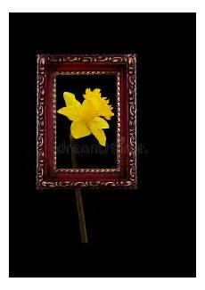 cornice a vista cornice antica vista attraverso narciso della primavera
