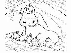 real bunny coloring pages and print for free