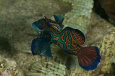 Ausmalbilder Bunte Fische 34 Bunte Fische Zum Ausdrucken Besten Bilder