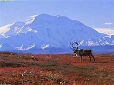 Pengertian Dan Karateristik Bioma Tundra Forester Untad
