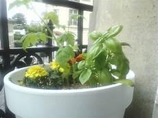 potager appartement comment faire un mini potager bio en appartement le