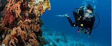 scuba diving in belize house resort spa