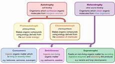 modes of nutrition bioninja