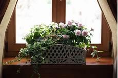 fiori da davanzale fiori sul davanzale della finestra fotografia stock