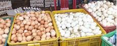 Wie Viele Eier Legt Ein Huhn In Der Woche Legeleistung
