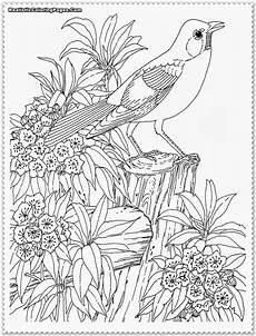 realistic parrot coloring page