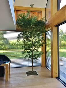Kleiner Baum Pflanze In Wohnraum Wohnung Kaufen
