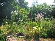 Wie Lege Ich Einen Garten An - wie lege ich einen bienenfreundlichen garten an nabu