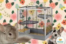 i grandi roditori scegli la gabbia per roditori adeguata