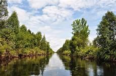 Taman Nasional Sebangau Sensasi Menelusuri Hutan Gambut Di