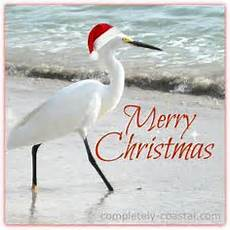 christmas in florida stan s paradise report