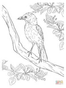 realistic florida scrub coloring page free printable coloring pages