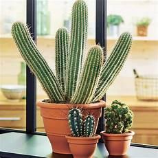 Cactus Mix Pot Cana Diam 232 Tre 32 Cm Autres Marques