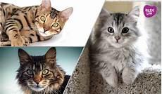 Gambar Kucing Dan Harimau