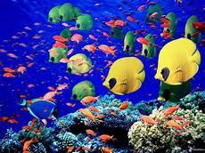 fische bei den korallen