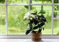beste gut aussehende zimmerpflanzen um die natur an ihren
