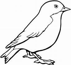 sparrow coloring coloring bird coloring
