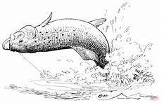 Ausmalbilder Fische Hecht Ausmalbild Eine Springende Forelle Ausmalbilder