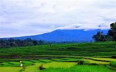 Pemandangan Alam Foto Pemandangan Sawah Dan Pegunungan