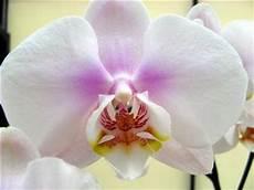 orchidee verzorging ge 239 mpregneerd hout beitsen