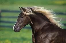 Ausmalbilder Pferde Norweger Norweger Pferde Kostenlos Herunterladen Bilder Und