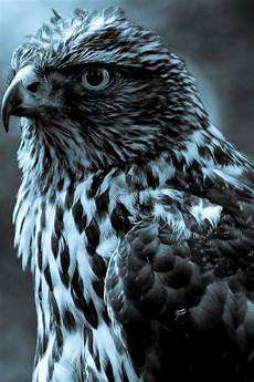 iphone black eagle wallpaper hd hd black and white eagle wallpapers for iphone 4