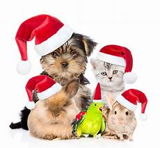 merry christmas to all pets and owners argos pet insurance