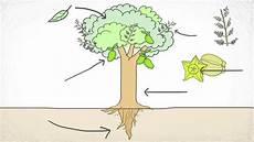 Gambar Kartun Batang Pohon Bestkartun