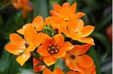 Zimmerpflanze Orange Blüte - bild 19 aus beitrag bl 252 tensinfonie