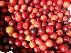 wonderful camu camu peru delights
