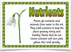 plants lesson ks1 13726 helping plants grow well treetop displays eyfs ks1 ks2 classroom display and primary